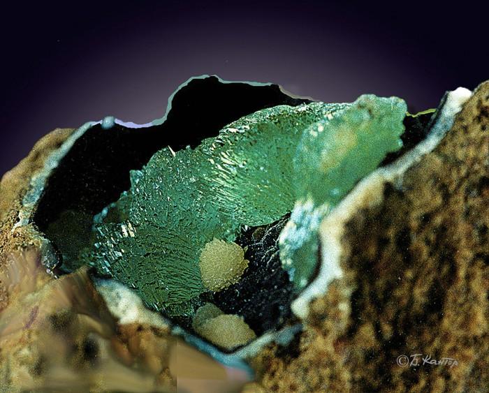 Расщепленные кристаллы анапаита с наросшими сферолитами барита в полости ископаемой раковины.