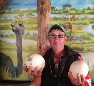 Не очень спокойно взять страусиные яйца, еще тепленькие. Поскольку птички серьезные. 150 кг весу, а коготь на нержавеющей стали оставляет основательную царапину.