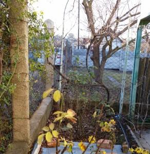 Капитальная беседка и экзотические растения на даче