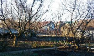 Симферополь, дача в массиве Живописное, так выглядит сад в декабре