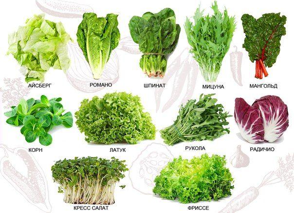 Виды зеленных салатных растений лета
