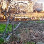 Сад в декабре 2019, Живописное, Симферополь. Много солнца, чистый сухой воздух